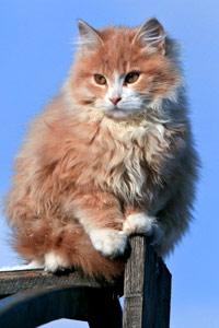 Аватары коты скачать