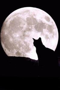 картинки на аву кошки черные