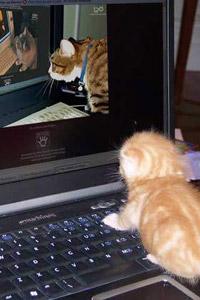 кошка кусает кота