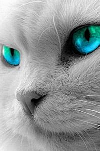 Аватарки на вк кот