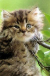 Фотки крутых котов скачать