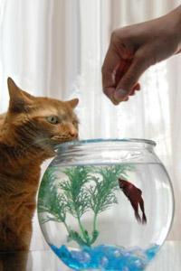 Котов в контакте моя страница