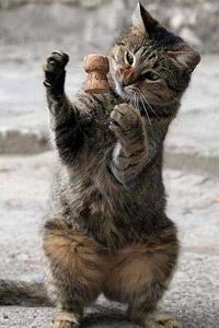 Скачать картинки с котятами и кошками