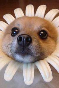 Аватарка для контакта смешная собака